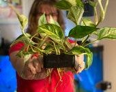 Poth-O-Carry Original Pothos (And other plants) Over-Aquarium Holder