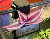 Poth-O-Carry Original Rail Edition - Pothos (And other plants) Over-Aquarium Holder