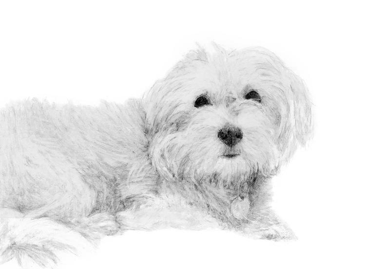 Medium Custom Pet Portrait