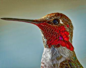 Anna's Hummingbird Color Print