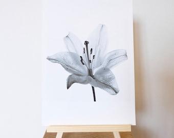 White Lily Photograph Print
