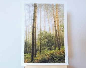 Photograph Print taken in The Outwoods, Leicestershire