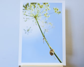 Photograph Print of Two Snails Clinging to a Seed Head Umbrella.