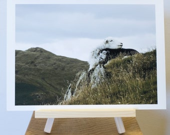 Photograph Print taken of a Mother Sheep and her Lamb on Steel Knotts in the Lake District.