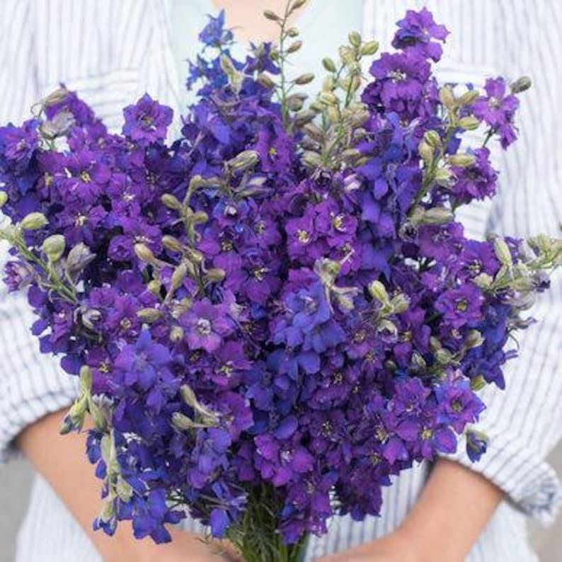 100 QIS Dark Blue Larkspur Flower Seeds For Fall Plantings