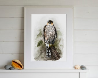 Eurasian Sparrowhawk Accipiter Nisus Taxidermy Real Stuffed Bird Prey Hunting Zoology