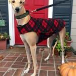Greyhound Coat, Dog Coat, Custom Dog Jacket, Dog Coat, Red, Black, and Green Tartan Plaid Fleece with Green Fleece Lining