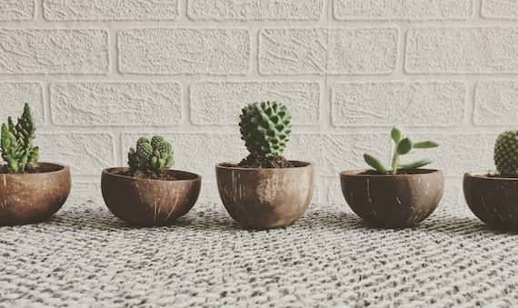 X3 coconut plant pots