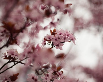 Limited Fine Art Print Cherry blossom, Nature photography, Flower Photography, Spring