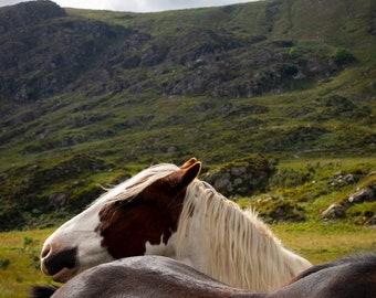 Limited Fine Art Print Horses in Ireland, Nature Photography, Animal Photography, Gap of Dunloe