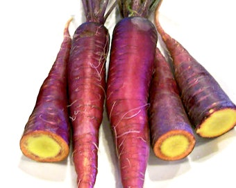 Dragon Carrot - RARE Heirloom 40 seeds