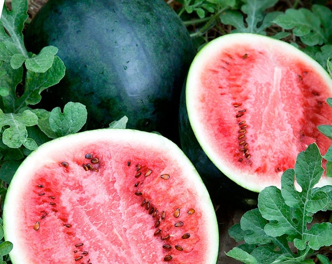 Sugar Baby Red Watermelon - RARE heirloom 15 seeds