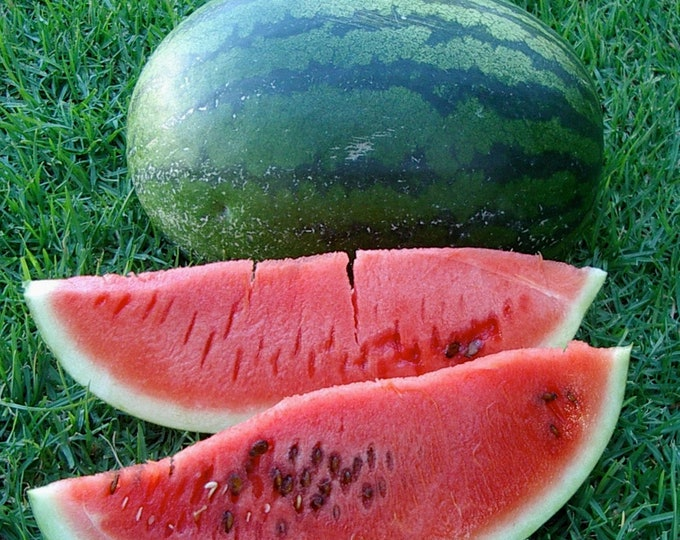 Congo Watermelon - RARE heirloom 10 seeds