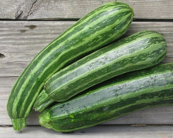 Cocozelle Zucchini - RARE heirloom 15 seeds