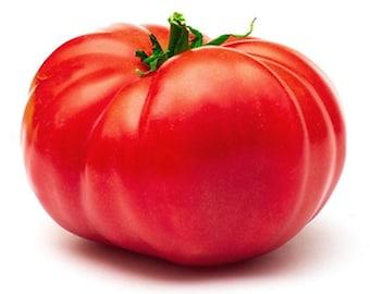 Giant Belgium Tomato - Heirloom 10 seeds