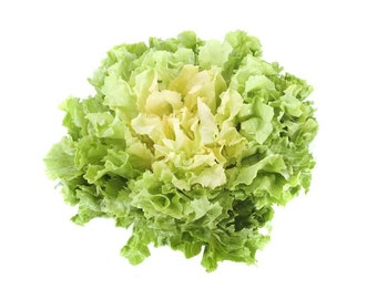 Verde a Cuore Pieno (Full Heart Green) Escarole  - organic heirloom 20 seeds