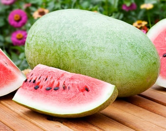 Charleston Gray Watermelon - Heirloom 15 seeds