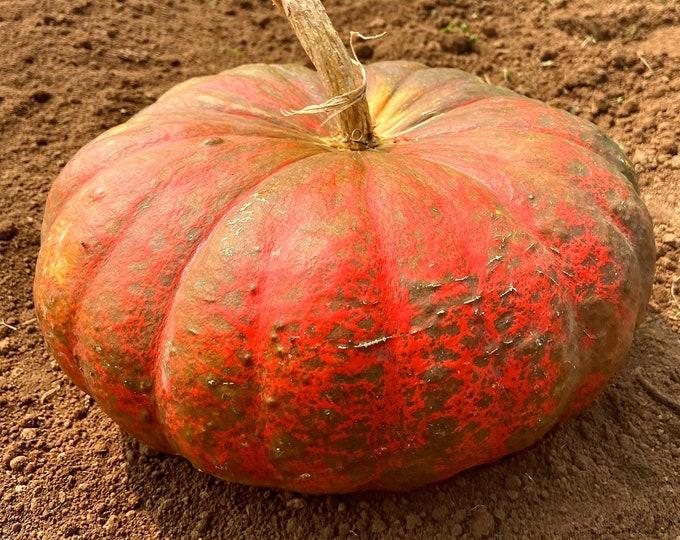 Rouge Vif D' Etampes (Cinderella) Pumpkin - RARE heirloom 20 seeds