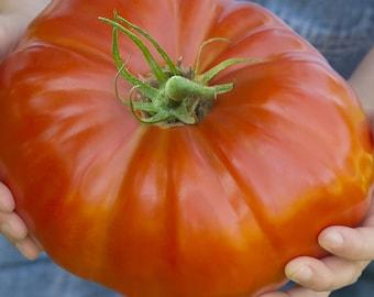 Delicious Tomato - Heirloom 10 seeds