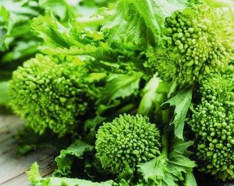 Rapini Broccoli Raab- Heirloom 10 seeds