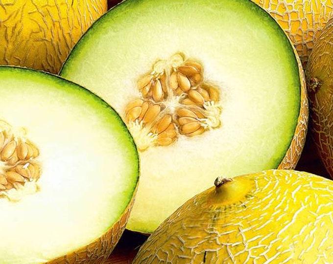 Israel Melon - RARE Heirloom 10 seeds