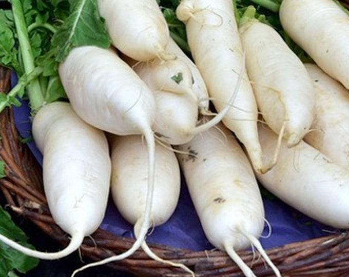 Lunar White Carrot - VERY RARE Heirloom 30 seeds
