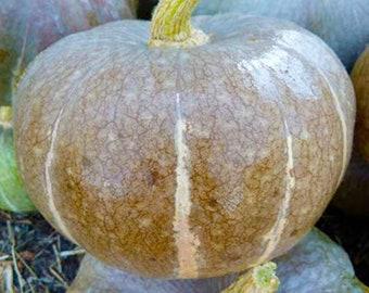 Strawberry Crown Winter Squash - RARE Heirloom 5 seeds