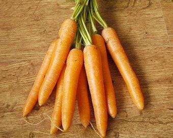 Kuroda Carrot - RARE Heirloom 30 seeds