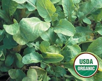 Arugala Lettuce Greens - organic heirloom 20 seeds