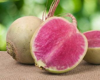 Watermelon Radish- RARE Heirloom 50 seeds