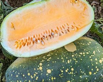 Yellow Sun Moon & Stars Watermelon - heirloom 10 seeds