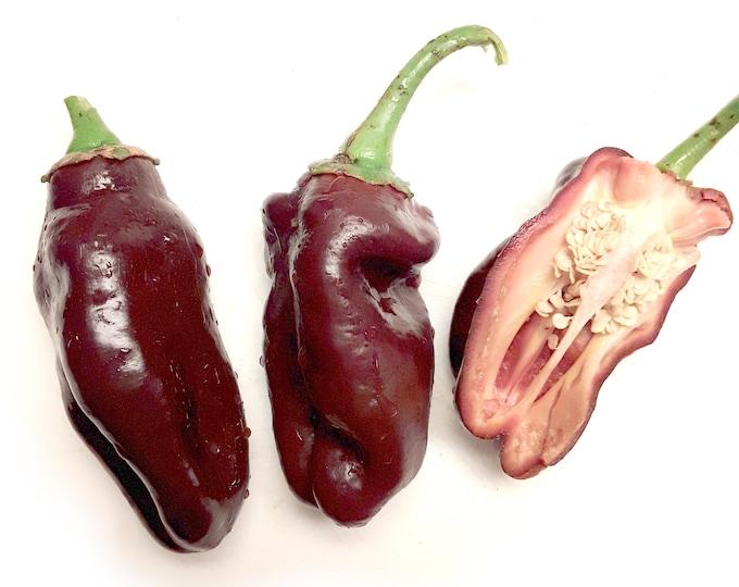 Chocolate Bell Sweet Pepper - RARE heirloom 20 seeds