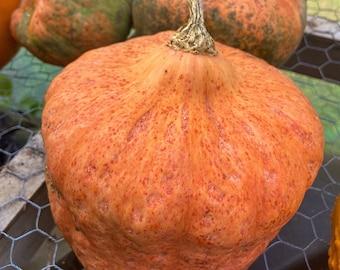 Australian Butter Squash - RARE heirloom 15 seeds
