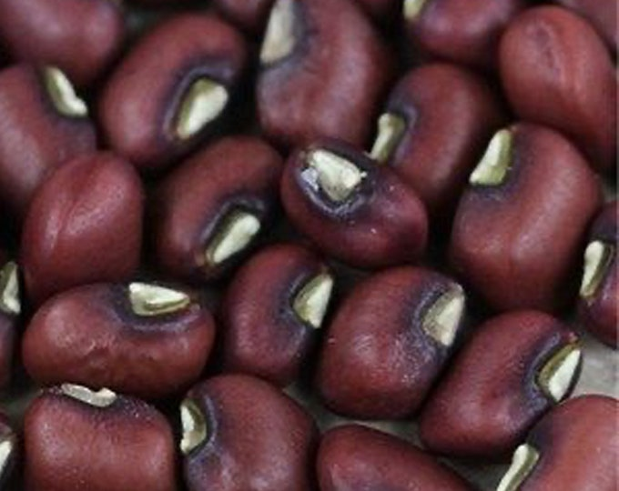 Haricot Rouge de Burkina Faso Pea - RARE Heirloom 10 seeds