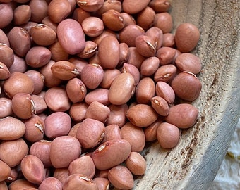 Santa Maria Pinquito Bean - heirloom 30 seeds