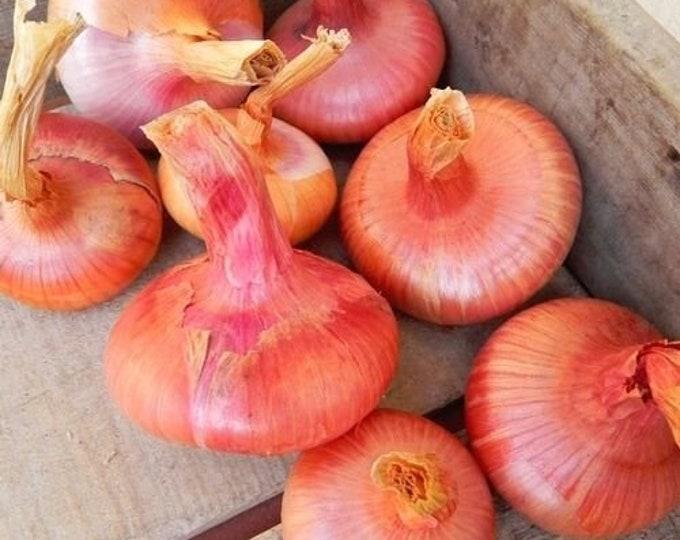 Italian Flat Bergamo Onion - Rare Heirloom 20 seeds