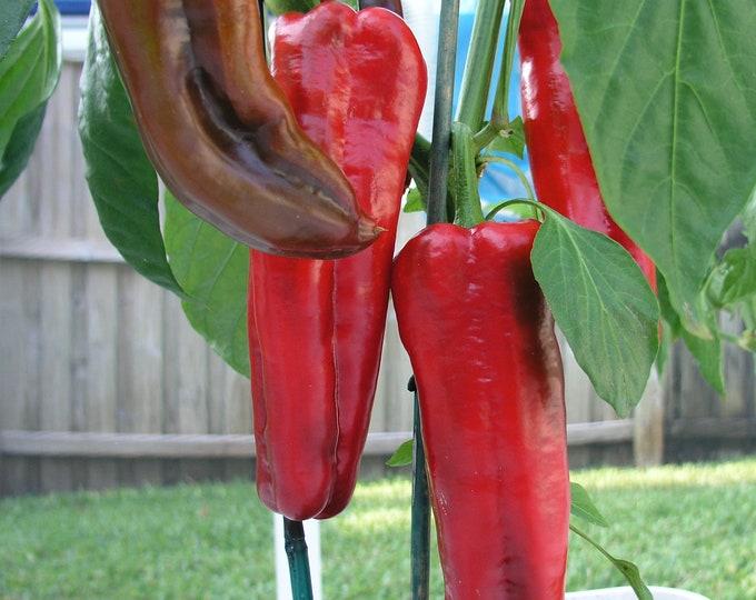 Red Marconi Sweet Pepper - Heirloom 10 Seeds