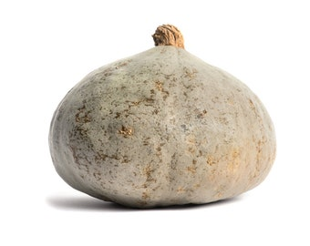 Silver Bell Squash - RARE heirloom 10 seeds