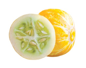 True Lemon Cucumber - heirloom 10 seeds