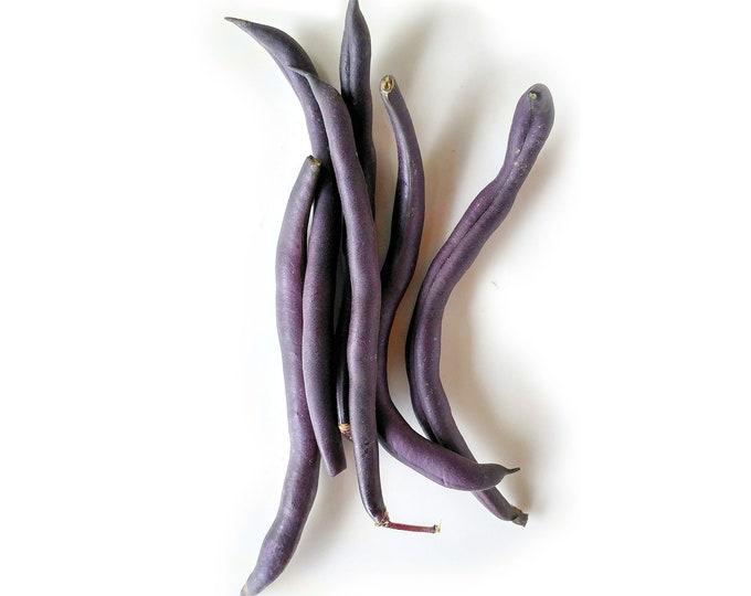 Royalty Purple Pod Bush Bean - Heirloom 20 seeds