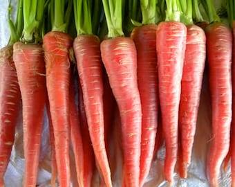 Pusa Rudhira Red Carrot - RARE heirloom 40 seeds