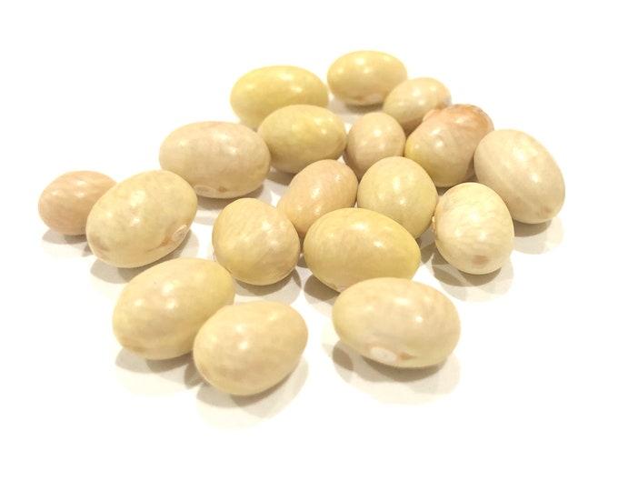 Mayocoba Bean - RARE heirloom 15 seeds