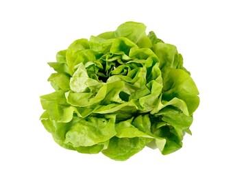 Buttercrunch Lettuce - Heirloom 50+ seeds