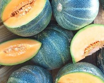 Petite Gris De Rennes Melon -VERY rare heirloom 7 seeds