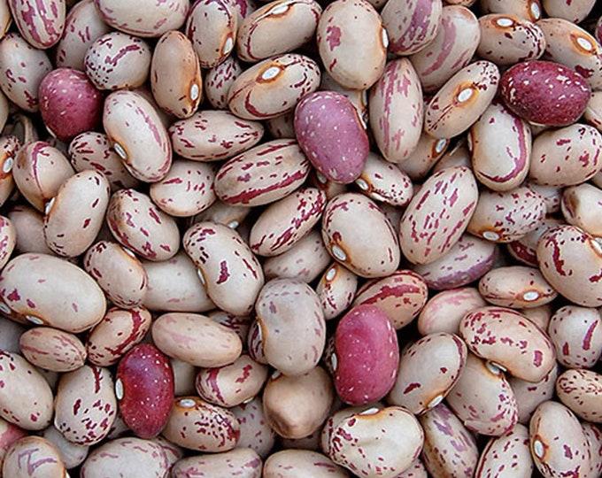 Lina Sisco's Bird Egg Bean - Heirloom 15 seeds