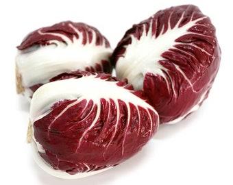 Rossa di Verona Radicchio - Heirloom 20+ seeds