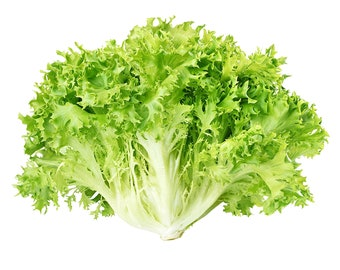Frisee Endive Lettuce - Heirloom 50+ seeds