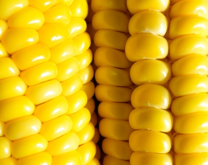 Golden Bantam Sweet Corn - RARE Heirloom 15 Seeds