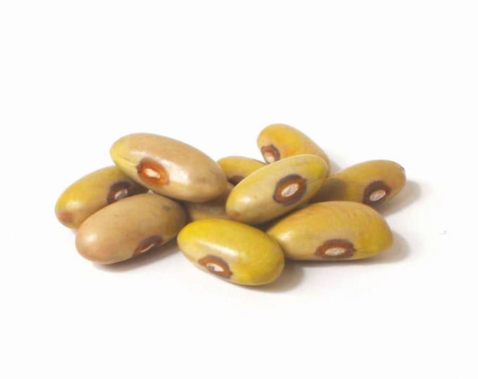 Arikara Yellow Bean - RARE heirloom 20 seeds