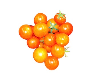 Yellow Currant Tomato - RARE heirloom 10 seeds